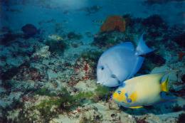 Imagem: Pesquisa registrou a ocorrência de 131 espécies de peixes na área do parque (Foto: Eduardo Freitas)