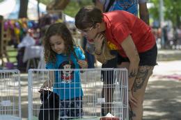 Imagem: Na Feirinha de Adoção da ONG Abrace, os participantes poderão levar um novo amigo canino ou felino para casa (Foto: Rômulo Santos)